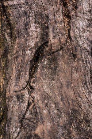Photo pour Image plein cadre du fond du tronc d'arbre fissuré - image libre de droit