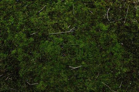 Photo pour Image plein cadre de fond de mousse verte - image libre de droit