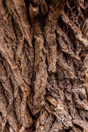 Photo pour Image plein cadre du vieux fond de tronc d'arbre - image libre de droit