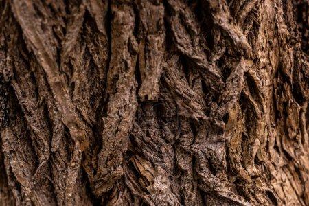 Photo pour Image plein cadre du vieil arrière-plan du tronc d'arbre - image libre de droit