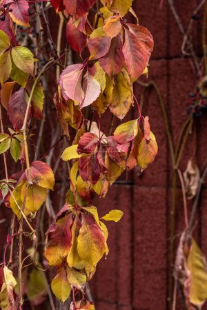 close up view of colorful autumnal leaves near red wall