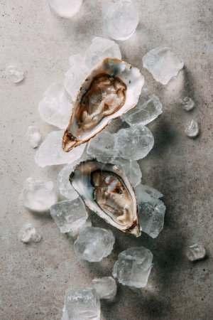 Photo for Top view of oysters and ice cubes on grey tabletop - Royalty Free Image