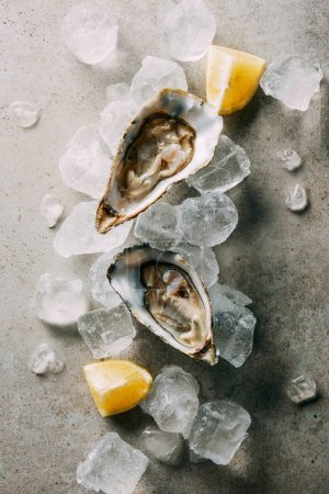 top view of oysters, cut lemon and ice cubes on grey tabletop