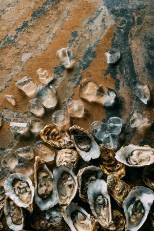 Photo for Top view of arranged ice cubes and oysters on grungy surface - Royalty Free Image
