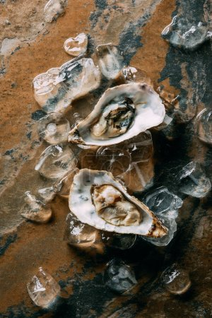 Photo for Flat lay with arranged ice cubes and oysters on grungy tabletop - Royalty Free Image