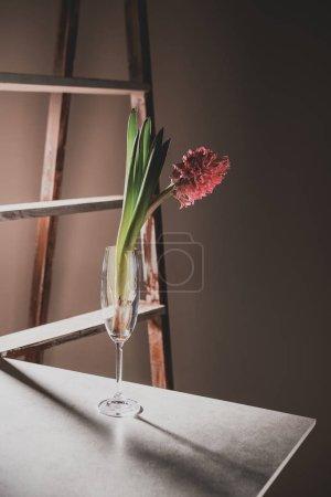 Foto de Flores jacintos rosas en Copa de champán en la mesa de piedra con escalera de madera en el fondo - Imagen libre de derechos
