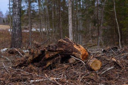 Photo pour Vue panoramique de la forêt dans la journée - image libre de droit