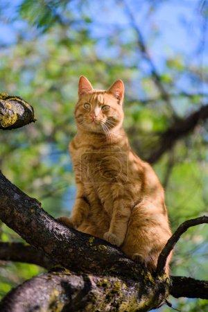 Photo pour Closeup shot of cute ginger cat - image libre de droit
