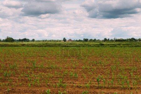 überflutete Reisfelder in der ländlichen Lombardei, Italien.