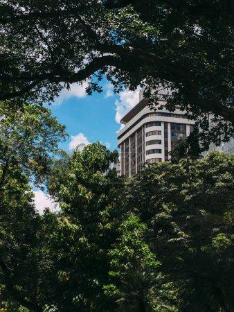 Foto de Edificio residencial de gran altura oscurecido por la exuberante vegetación de la selva tropical, ideal para una cubierta de libro como un montón de espacio de copia. Capturado en Belo Horizonte, Brasil - Imagen libre de derechos
