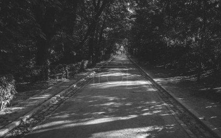 Photo pour Rue de route à travers la forêt d'automne. feuilles et arbres colorés en automne saison de l'europe. automne photographie d'art. doux ton d'été indien clair. couleur vibrante. voyage icône thème concept . - image libre de droit