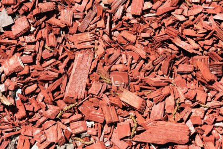 close-up view of red wooden chips background