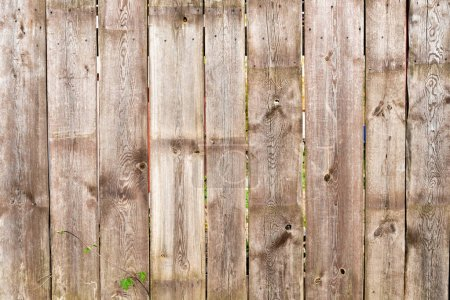 brown wooden fence background with green leaves