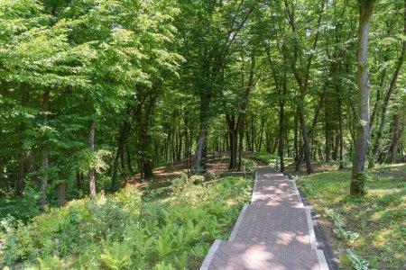 Photo pour Vue panoramique des arbres dans le parc avec chemin d'asphalte - image libre de droit