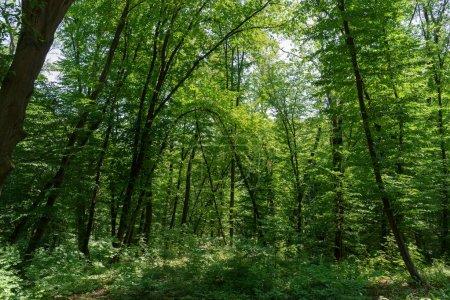 vue panoramique de la forêt avec herbe et arbres verts pendant la journée