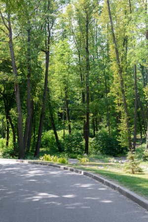 scenic view of asphalt path and trees in park