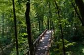 """Постер, картина, фотообои """"высокий угол зрения деревянный мост и деревьев в парке"""""""