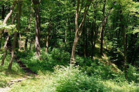 vue panoramique sur les escaliers et les arbres avec lumière du soleil dans le parc