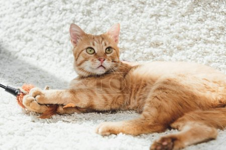 beautiful furry ginger cat lying on white carpet and looking up