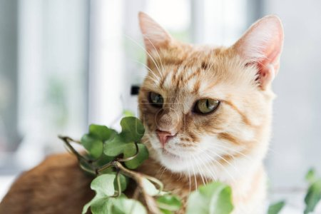 close-up view of beautiful red cat and houseplant with green leaves