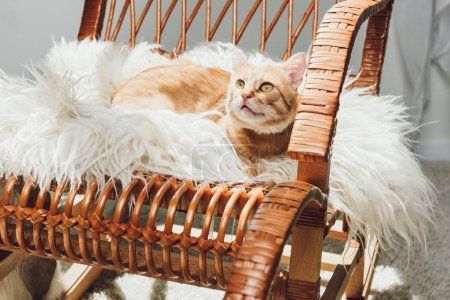 adorable red cat lying on rocking chair and looking up