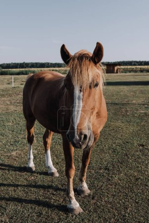 close up view of beautiful brown horse grazing on meadow in countryside