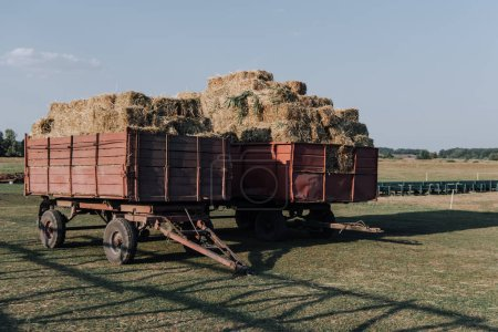 Photo for Rural scene with two hindcarriage full of stacked hay at farm in countryside - Royalty Free Image