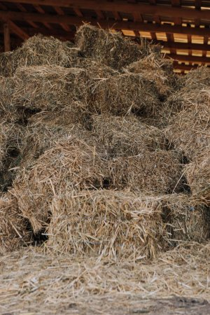 close up view of barn with stacked hay at farm