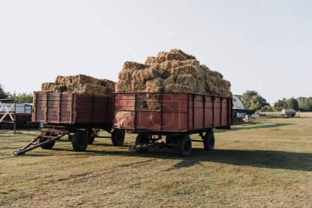 rural scene with two hindcarriage full of stacked hay at farm in countryside