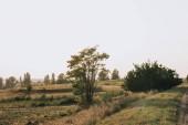 """Постер, картина, фотообои """"сельские сцены с поля и деревья в сельской местности"""""""