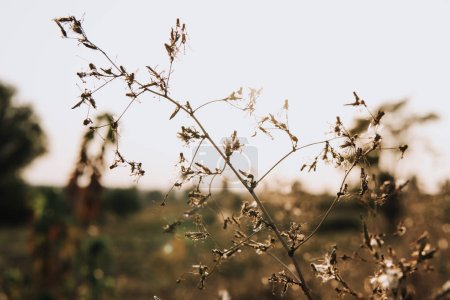 selective focus of rural plant on blurred background