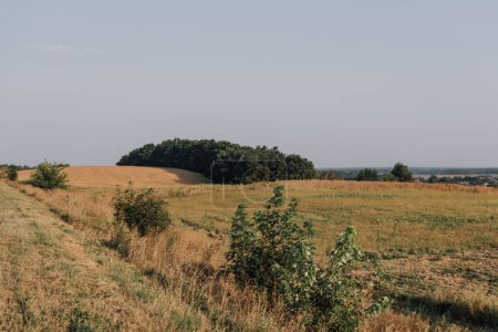 Photo for Scenic view with rural field and trees during daytime - Royalty Free Image