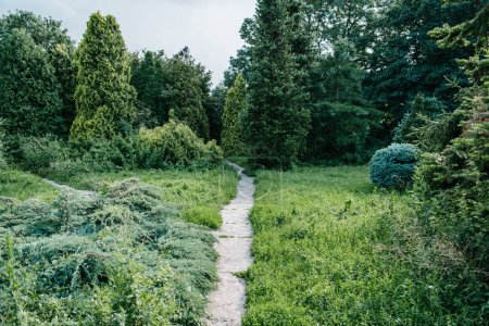 Photo for Footpath with various green plants around in park - Royalty Free Image
