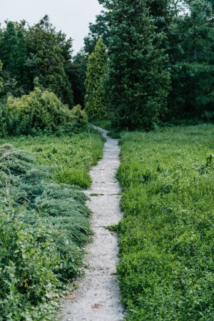 footpath with various plants around in park