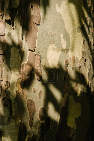 close-up shot of cracked tree bark under sun rays