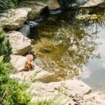 Adorable squirrel running on stones around pond in...