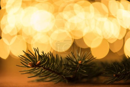 close up view of pine tree branch and golden bokeh lights backdrop