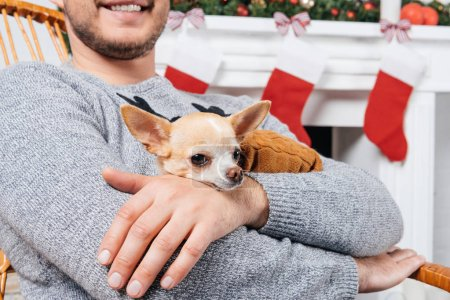 Photo for Cropped shot of man in rocking chair holding little chihuahua dog in hands in decorated room for christmas - Royalty Free Image