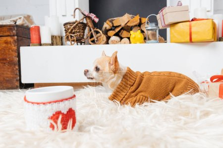 little chihuahua dog in sweater with cup of hot drink and christmas gifts near by