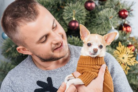 portrait of young man in festive winter sweater looking at little chihuahua dog in hands at home