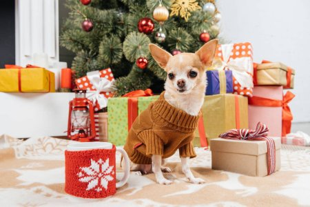 close up view of adorable chihuahua dog in sweater sitting near christmas presents and cup of hot drink on floor