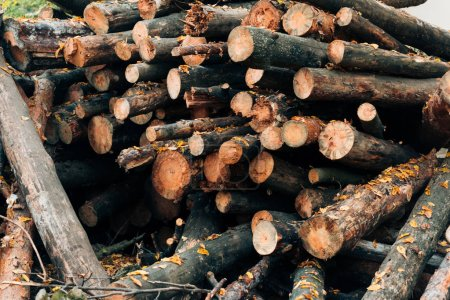 Close up of stacked wooden logs in autumn forest