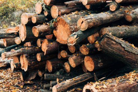 Close up of stacked wooden logs near fallen leaves