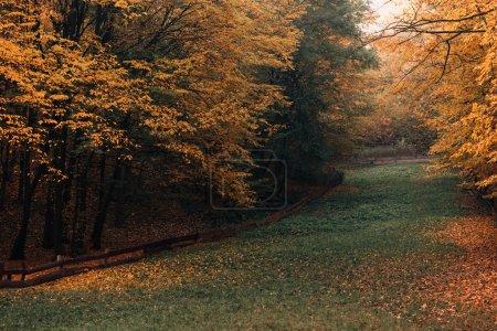 Photo pour Voie aux feuilles jaunes tombées en forêt d'automne - image libre de droit