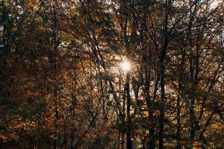 Photo for Sunshine through tree twigs in autumn park - Royalty Free Image
