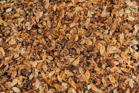 Close up of dry fallen leaves on ground
