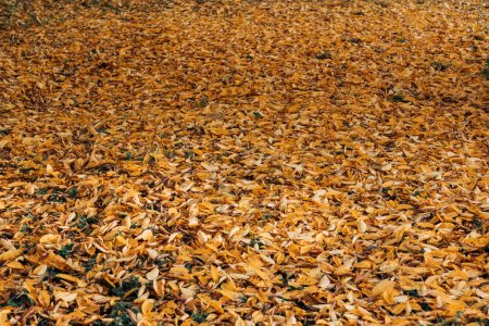 Photo for Fallen dry leaves in autumn forest - Royalty Free Image