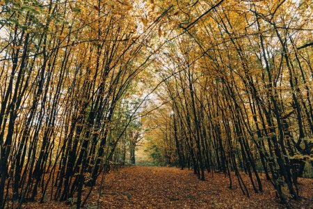 Photo for Pathway with golden fallen leaves in autumn forest - Royalty Free Image
