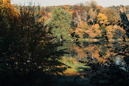 Photo pour Soleil sur le lac dans la paisible forêt d'automne - image libre de droit