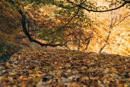 Photo for Selective focus of golden leaves in autumn forest - Royalty Free Image